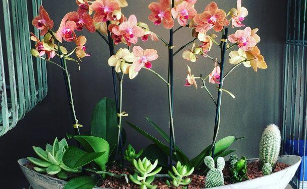 Arranjos florais de longa duração